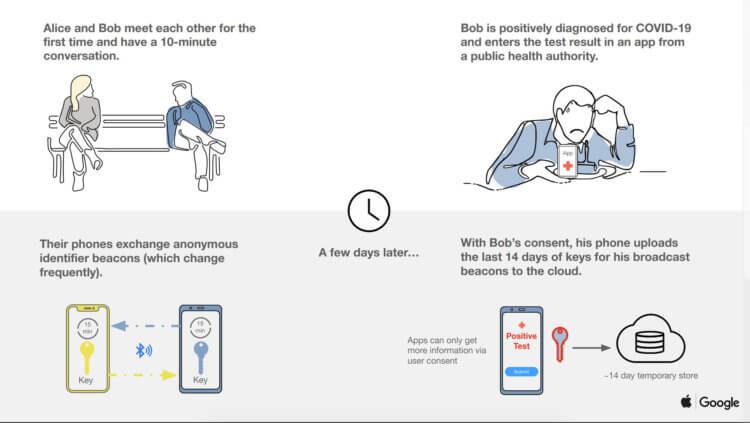 Apple и Google сделали систему отслеживания больных коронавирусом: как она работает?
