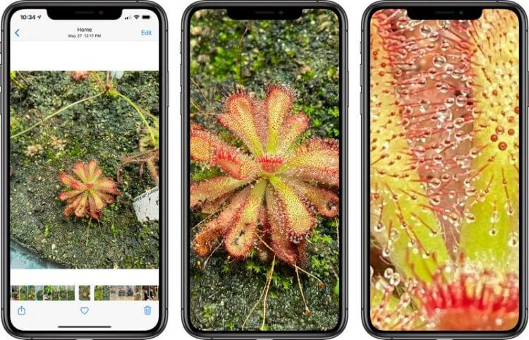 Apple сняла ограничения на зуммирование готовых фото в iOS 14