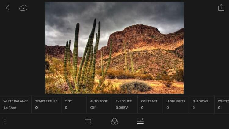 У пользователей удалились все фото после обновления Lightroom на iOS. Как так вышло
